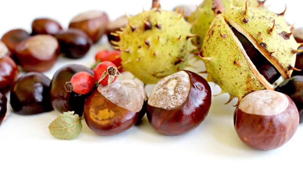 Viel Material zum basteln ist im Herbst in der Natur zu finden.