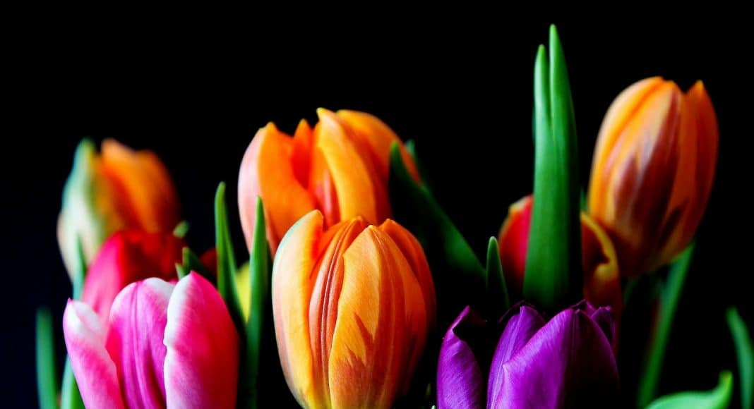 Schnittblumen sind häufig nicht ökologisch.