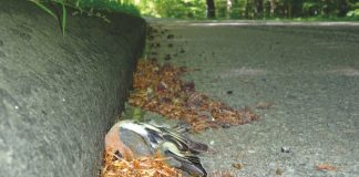 Fallen im Lebensraum können tödlich enden, wie hier ein toter Vogel.