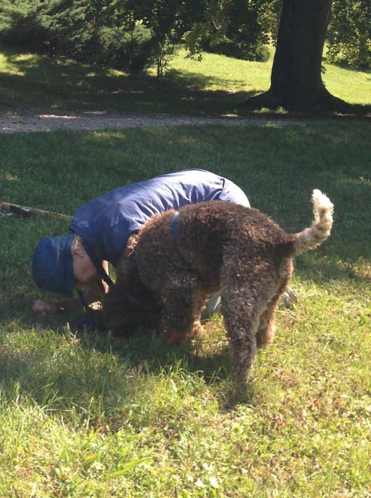 Der Hund hat in der Schweiz Trüffel gefunden.