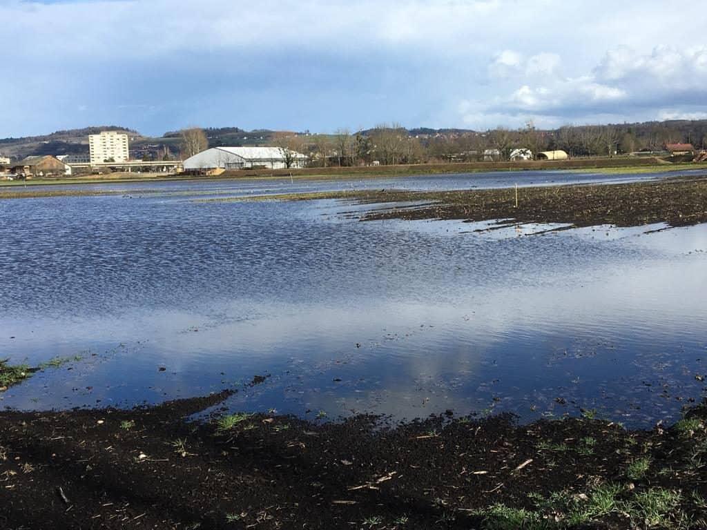 Dies Fläche wird geflutet, um eine Raststätte für die Zugvögel zu bieten.
