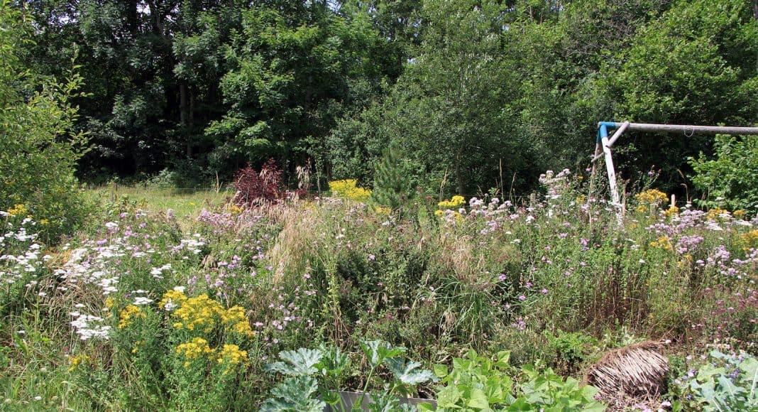 Ein naturnaher Garten mit viel Biodiversität