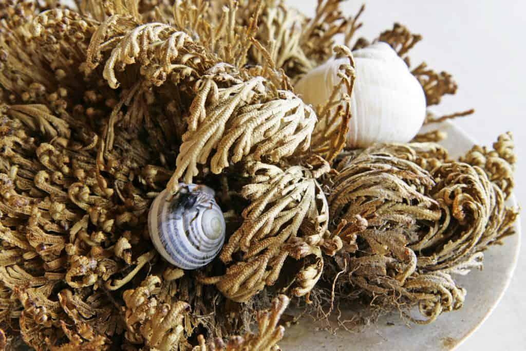 Wildbienen legen ihre Eier teilweise in leere Schneckenhäuser.