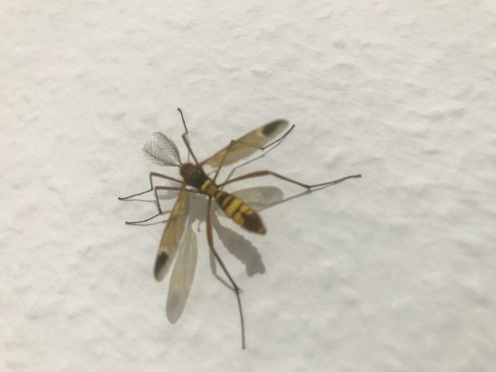 Was für ein Insekt ist es? Ein Nachtfalter?  1
