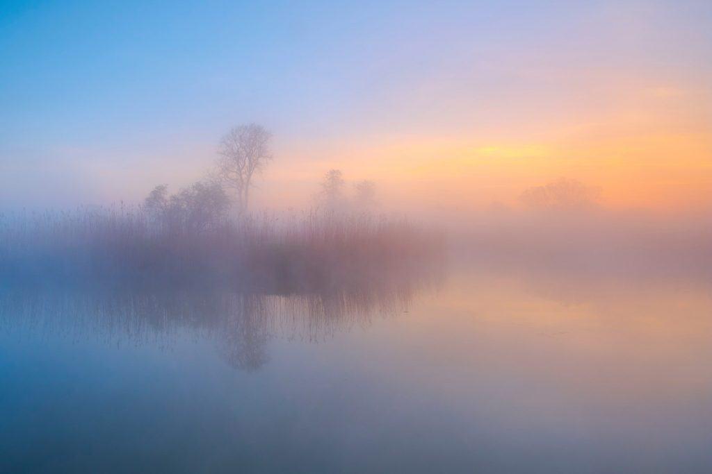Nebelmorgen in der Elbaue
