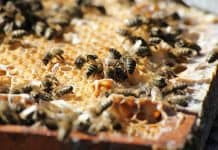 Bienen auf einer Wabe.