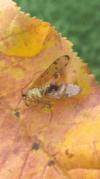 Wer kennt dieses Insekt?  1