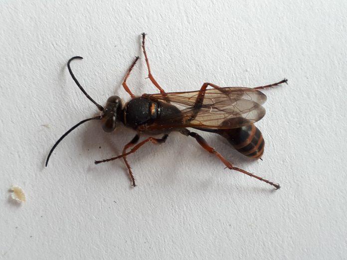Unbekanntes Insekt in der Wohnung  1