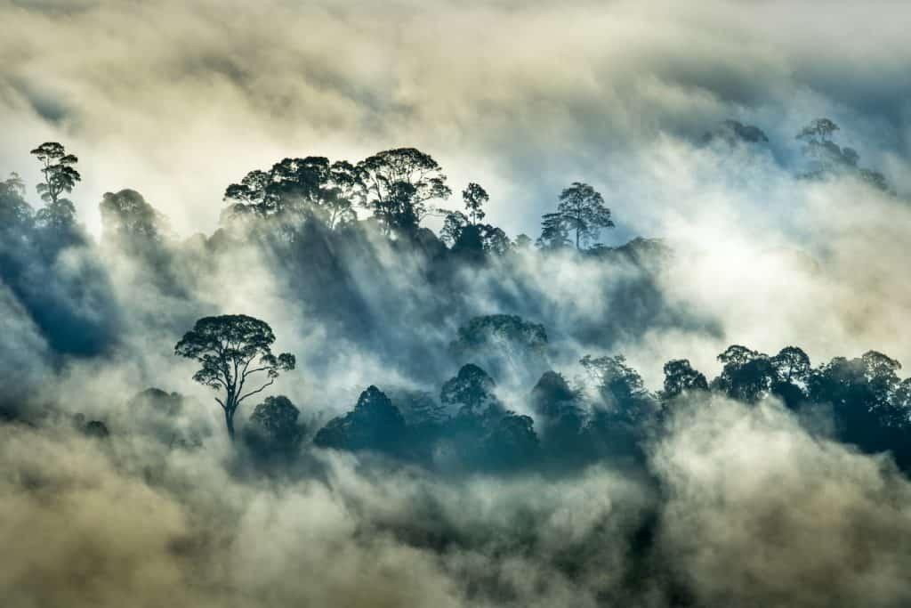 Ein Regenwald in Borneo.