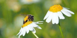 Das Zusammenspiel zwischen Pflanzen und Insekten ist gross.
