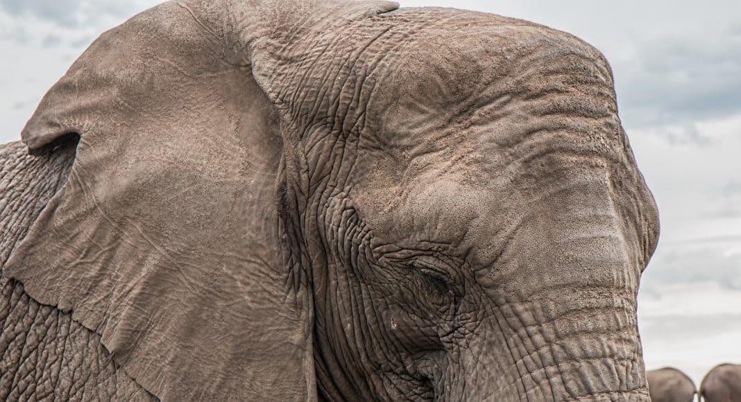 Der Elfenbeinhandel soll in Botswana legalisiert werden.