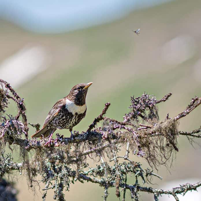 Wer kennt diesen Vogel?  1