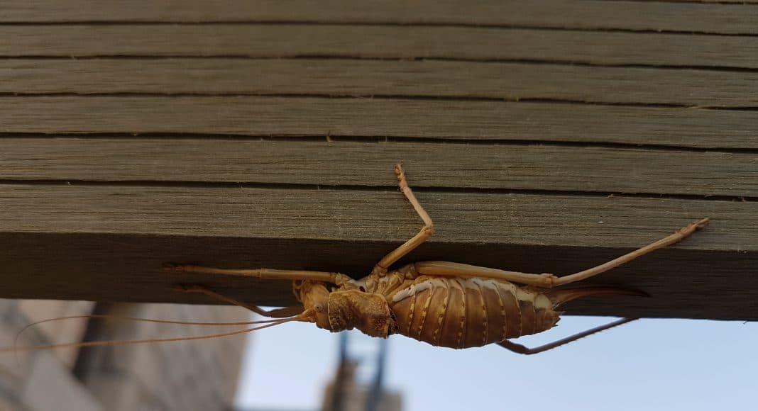 Welches Insekt ist das? 1