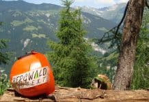 Bergwaldprojekt 1