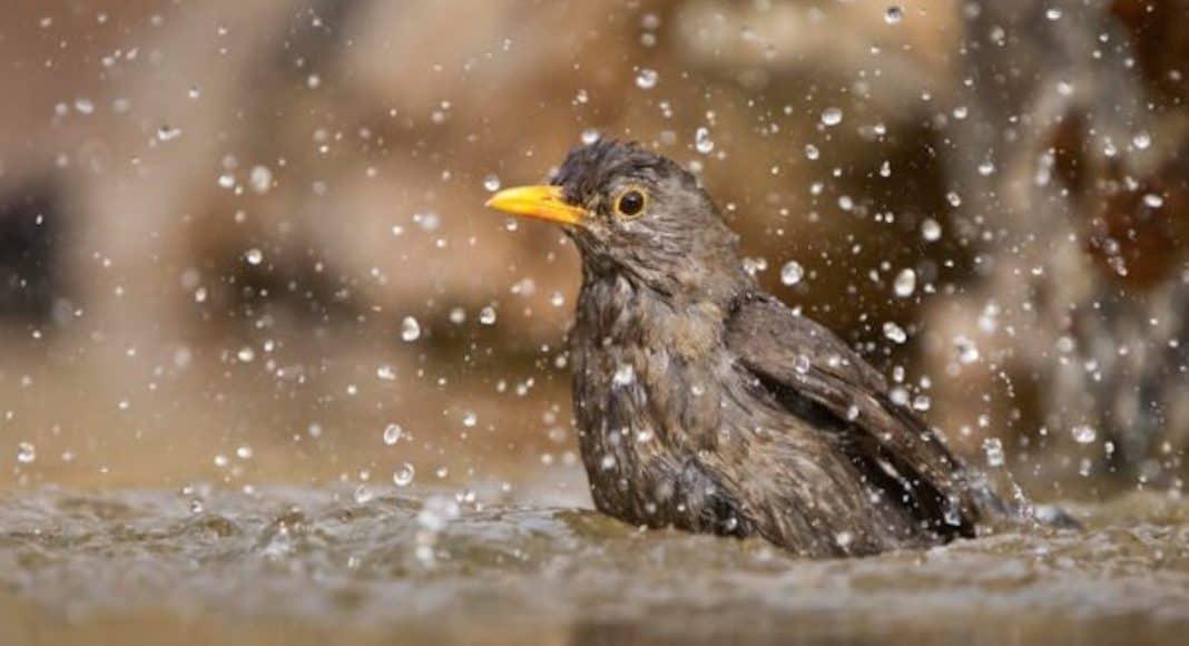 Hilfeleistung für Vögel während der Hitzewelle 1