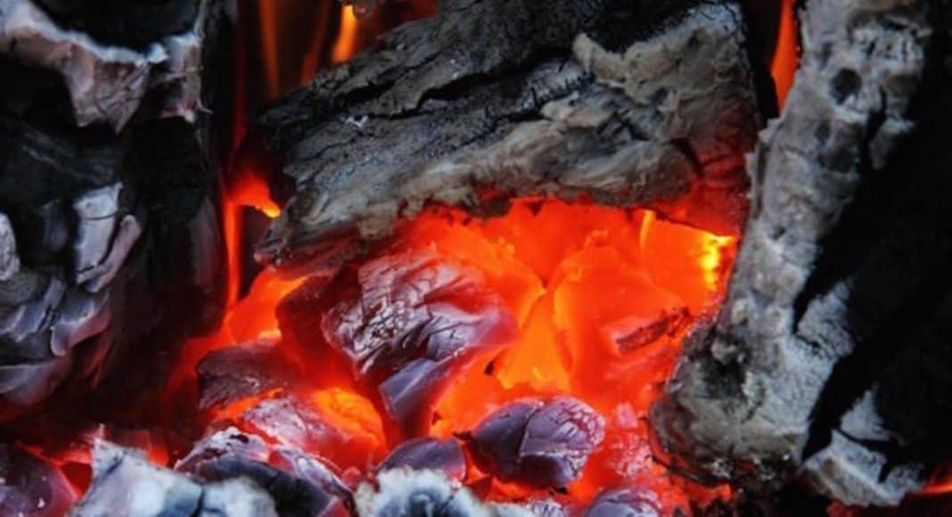 WWF setzt sich für tropenholzfreie Grillkohle ein 1