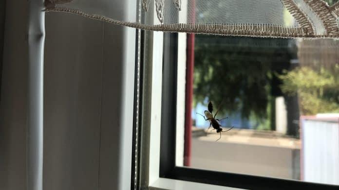 Wespenähnliches Insekt 1