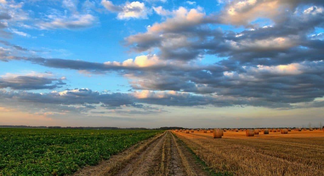 Ökologische Anstrengungen in der Landwirtschaft zwingend nötig 1