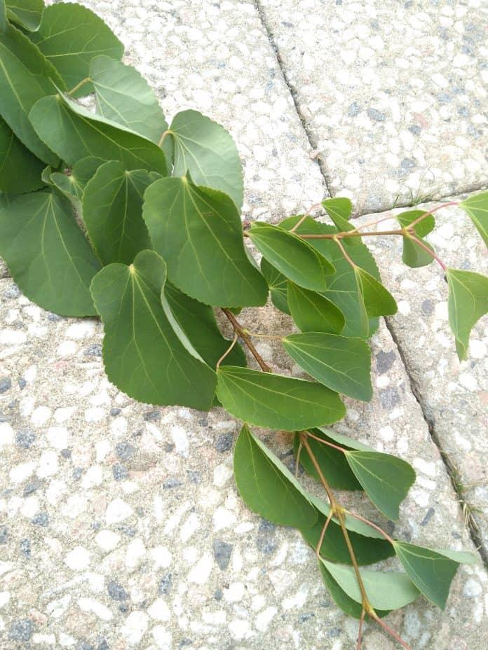 Welche Art Baum ist das? 1