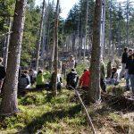 Studenten auf Exkursion im Wald