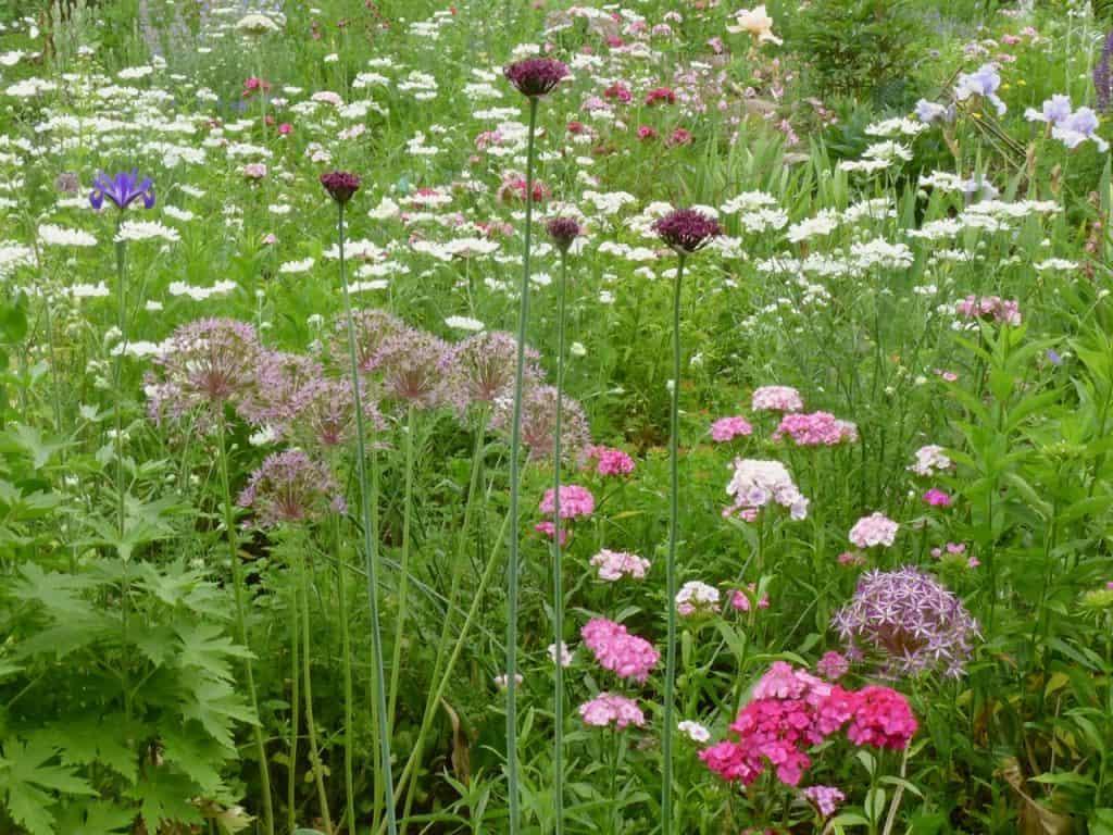 Kein Garten zu klein - vielfältig zu sein! Hotspot Kleingarten 8