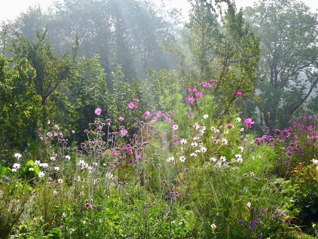Kein Garten zu klein - vielfältig zu sein! Hotspot Kleingarten 12