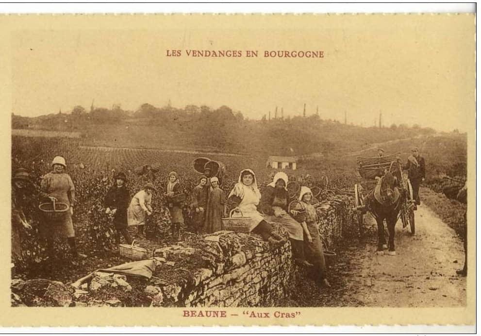 Postkarte «Weinlese in Beaune um 1900.»