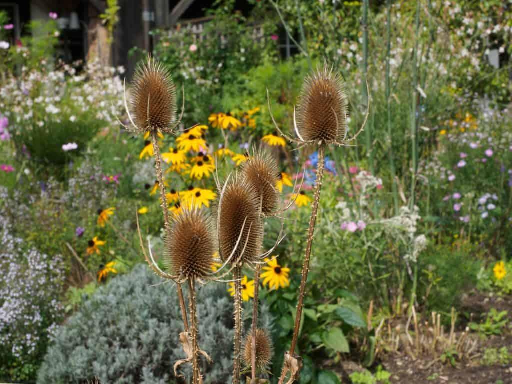 Kein Garten zu klein - vielfältig zu sein! Hotspot Kleingarten 24