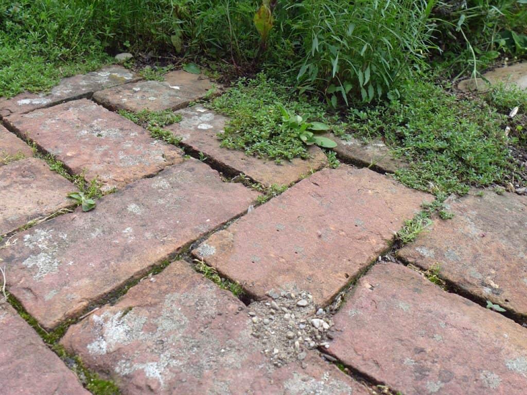 Kein Garten zu klein - vielfältig zu sein! Hotspot Kleingarten 28