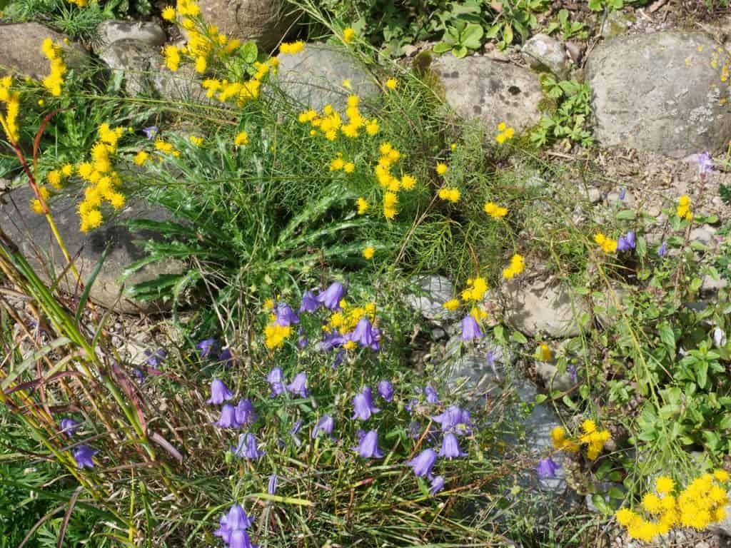 Kein Garten zu klein - vielfältig zu sein! Hotspot Kleingarten 30