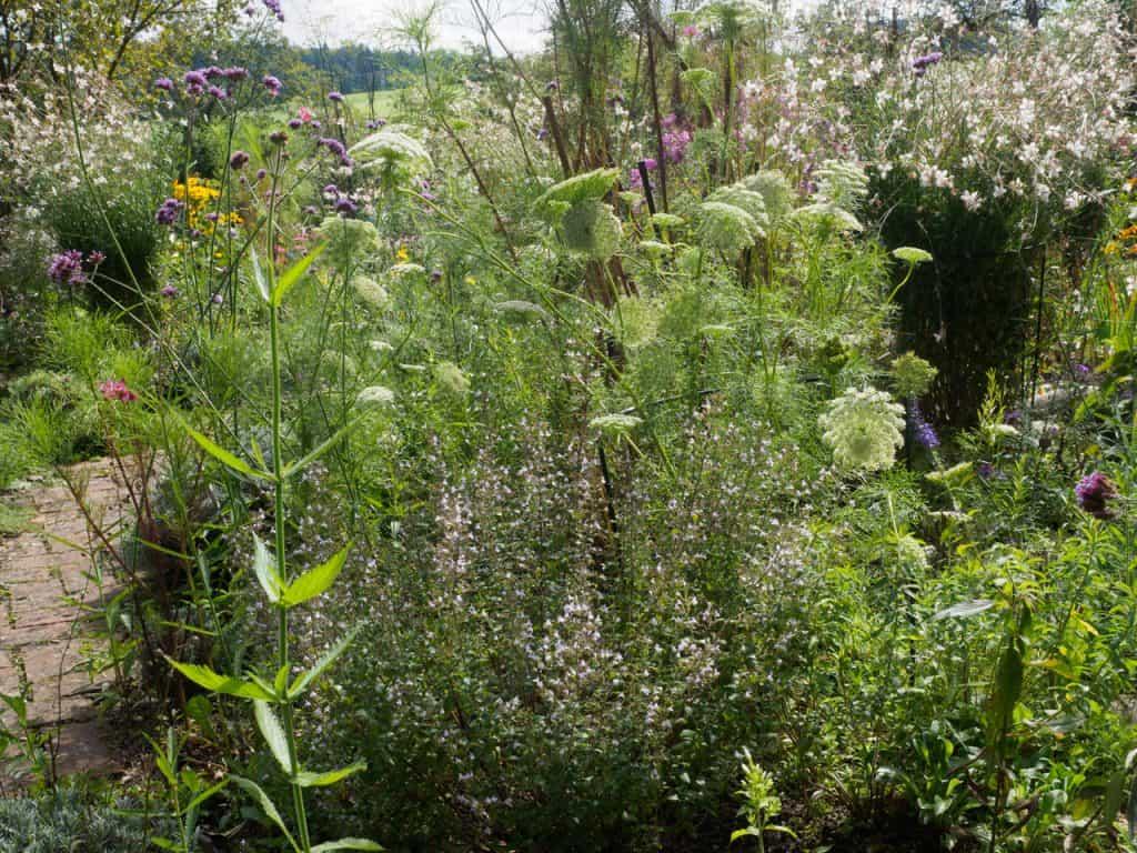 Kein Garten zu klein - vielfältig zu sein! Hotspot Kleingarten 32