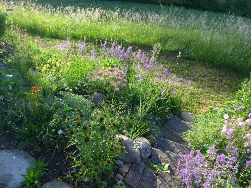die Ruderalfläche ist schnell bewachsen von standortgerechten, das bestehende Sortiment erweiternden Pflanzenarten.