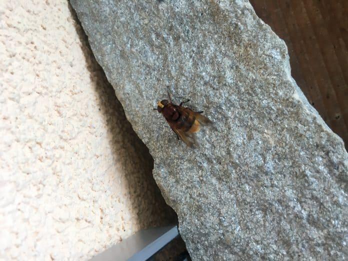 Unbekanntes Insekt 1