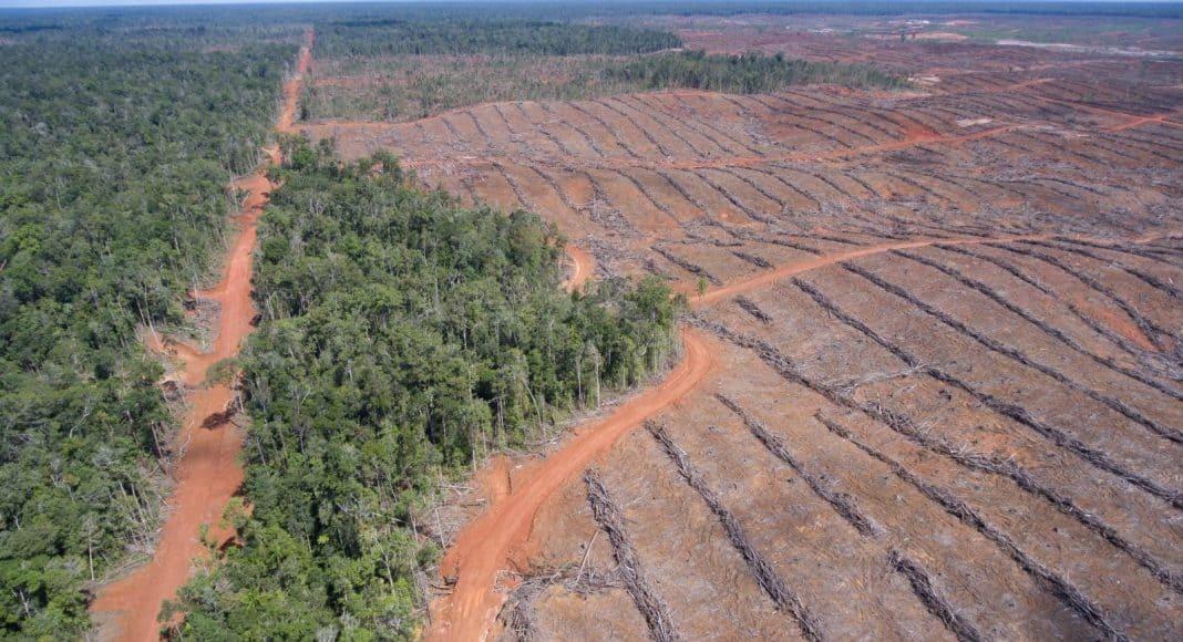 Konzerne sind Komplizen für Bolsonaros Urwald-Zerstörung 1