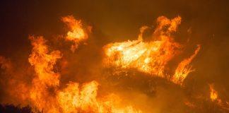 brennende Wälder