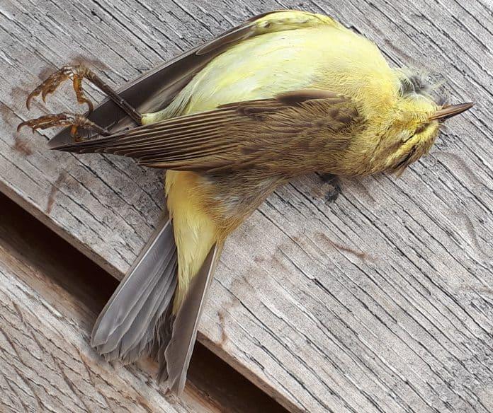 Unbekannter Vogel 1