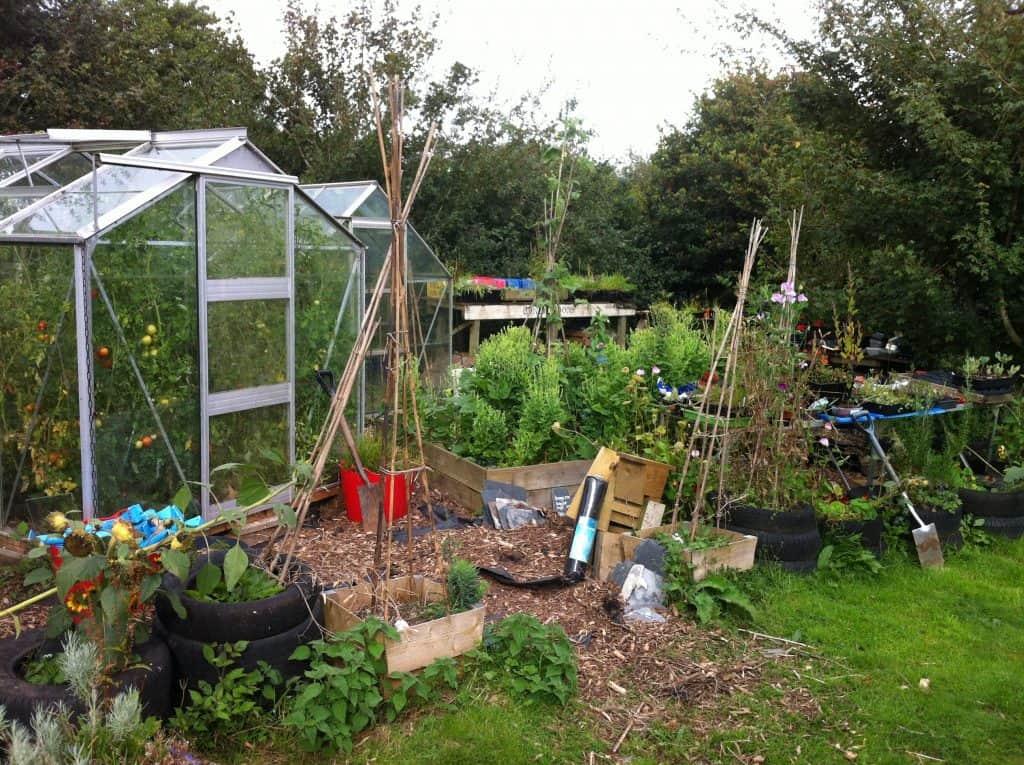 Im Garten werden zahlreiche Gemüse und Kräuter nebeneinander angepflanzt.