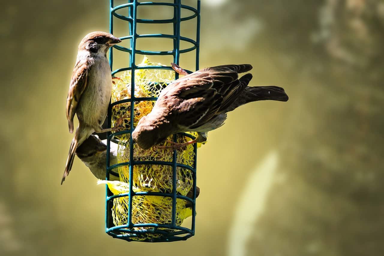 Plötzlich Keine Vögel Mehr Im Garten 2021