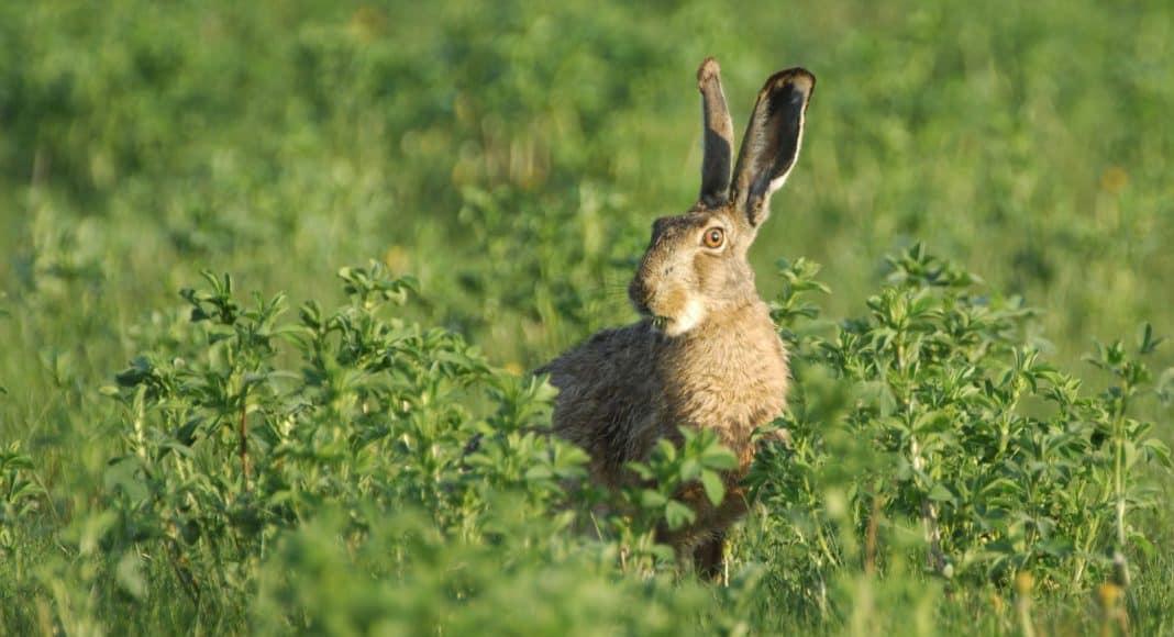 Referendum gegen missratenes Jagdgesetz ist unabdingbar 1