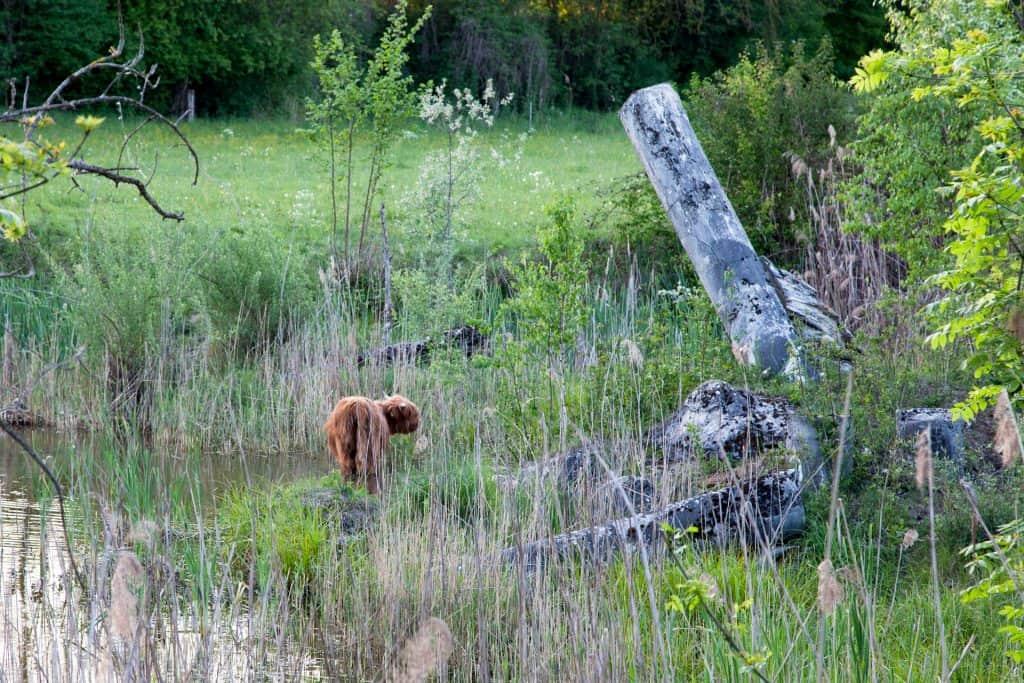Naturschutzgebiet Auried