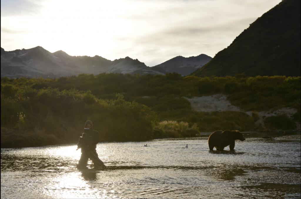 Der Bär in Alaska