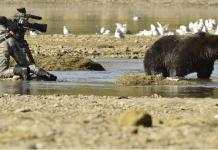 Mittendrin in der Welt der Bären