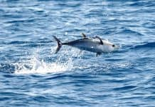 Thunfisch_WWF