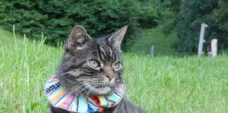 Farbige Halskrausen könnten den Jagderfolg von Hauskatzen reduzieren