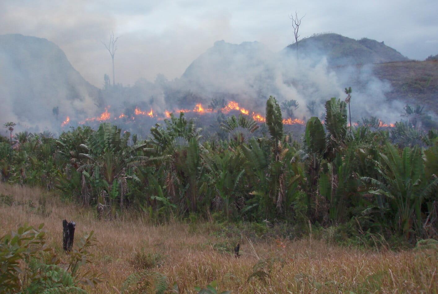 Tropen: grösserer Waldverlust wegen Corona