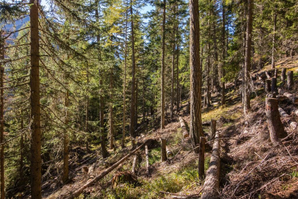 Schutzwaldpflege