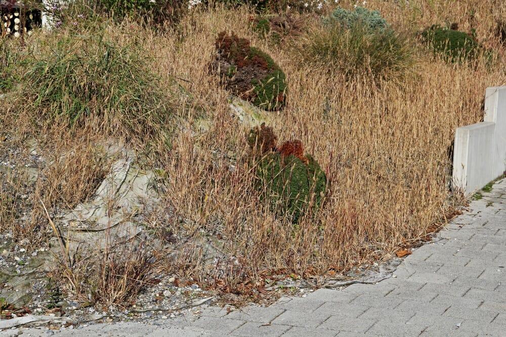 Schottergarten