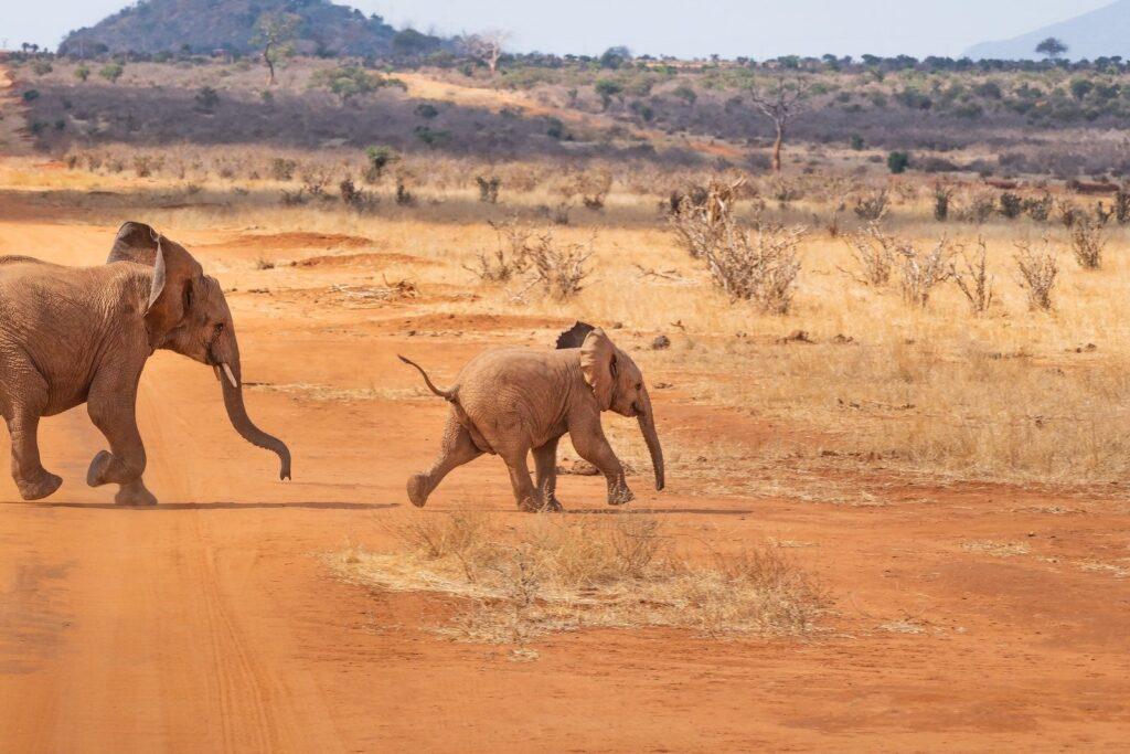 Fliehende Elefanten