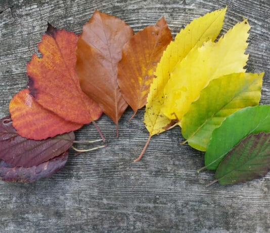 Blaetter mit Herbstverfaerbung