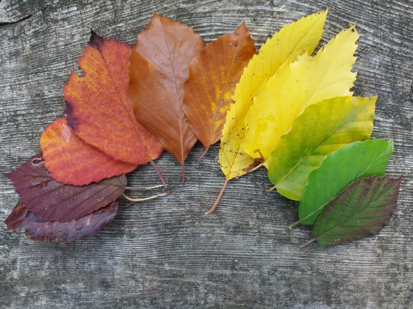 Blätter Quiz